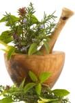 Травы при желчнокаменной болезни