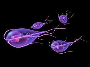 Лямблии в организме